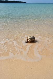 宮古島/冬のビーチの波打ち際の写真素材 [FYI01232990]