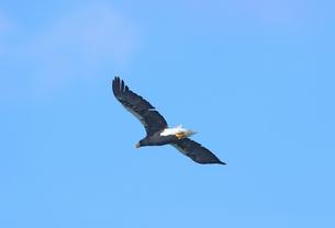 大鷲の写真素材 [FYI01233334]