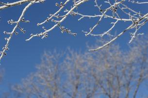 霧氷の写真素材 [FYI01233339]