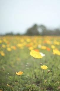 花畑の写真素材 [FYI01233481]