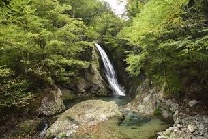 横谷峡四つの滝の鶏鳴滝の写真素材 [FYI01233555]