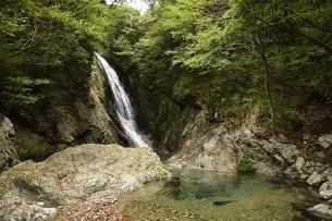 横谷峡四つの滝の鶏鳴滝の写真素材 [FYI01233556]