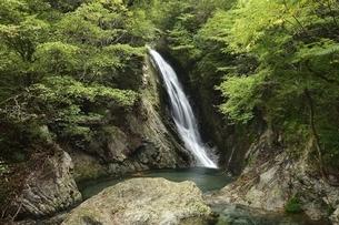 横谷峡四つの滝の鶏鳴滝の写真素材 [FYI01233558]