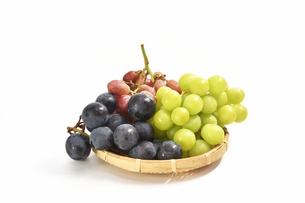 白背景の葡萄の写真素材 [FYI01233563]