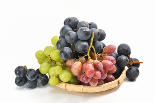 白背景の葡萄の写真素材 [FYI01233565]