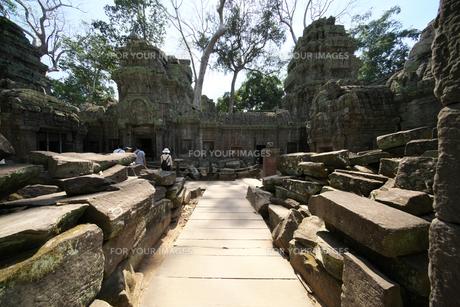 カンボジアのタ・プローム遺跡の巨木の写真素材 [FYI01233644]