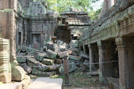 カンボジアのタ・プローム遺跡の巨木の写真素材 [FYI01233646]