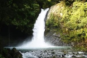 天城山 浄蓮の滝の写真素材 [FYI01234006]