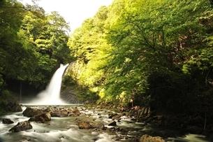 天城山 浄蓮の滝の写真素材 [FYI01234008]