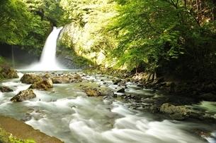 天城山 浄蓮の滝の写真素材 [FYI01234009]