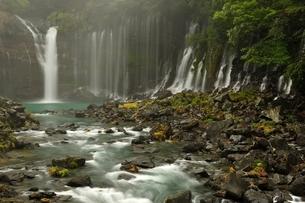 静岡県富士宮市 白糸の滝の写真素材 [FYI01234010]
