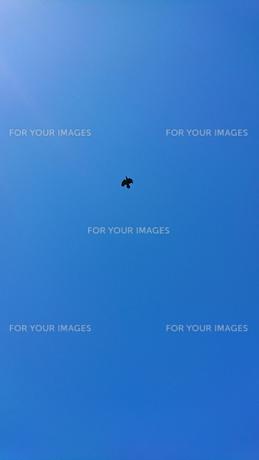 大空の鳥の写真素材 [FYI01234023]