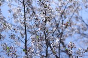 花の写真素材 [FYI01234206]