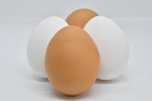 紅白卵4個の写真素材 [FYI01234291]