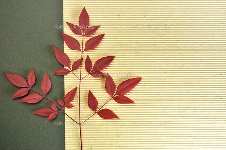 赤紫の植物の素材の写真素材 [FYI01234403]