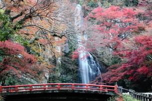箕面大滝の紅葉の写真素材 [FYI01234523]