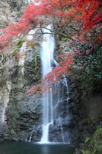 箕面大滝の紅葉の写真素材 [FYI01234524]