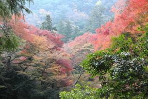 箕面公園の紅葉の写真素材 [FYI01234528]
