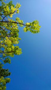 青空と葉っぱの写真素材 [FYI01234697]
