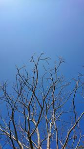 青の写真素材 [FYI01234702]
