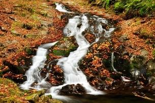 阿弥陀ヶ滝の下流の写真素材 [FYI01234751]