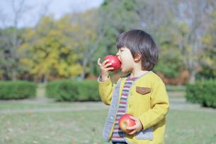 りんごを食べる 子どもの写真素材 [FYI01234764]