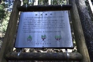 株杉の森 説明看板の写真素材 [FYI01235051]