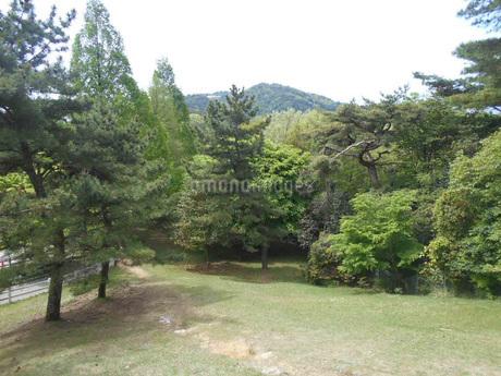 六甲山牧場の木々in神戸の写真素材 [FYI01235084]