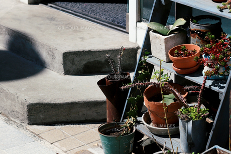 店頭に飾られた鉢植えの植物の写真素材 [FYI01235124]