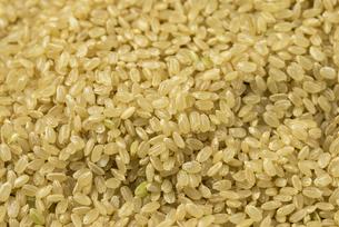 玄米の写真素材 [FYI01235186]