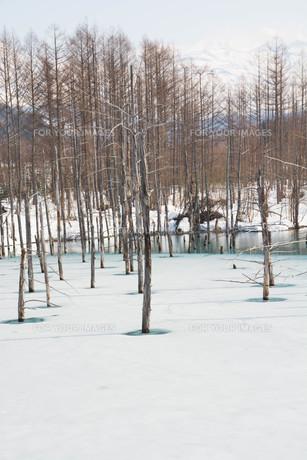 雪解けの湖 美瑛町の写真素材 [FYI01235214]