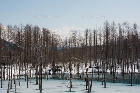 雪解けの湖 美瑛町の写真素材 [FYI01235215]