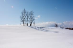 丘の上の冬木立 美瑛町の写真素材 [FYI01235219]