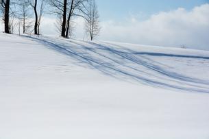 丘の上の冬木立 美瑛町の写真素材 [FYI01235220]