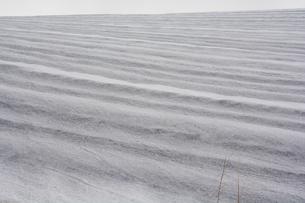 融雪剤が撒かれた雪の畑の写真素材 [FYI01235221]