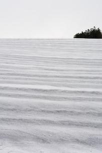 融雪剤が撒かれた雪の畑の写真素材 [FYI01235222]