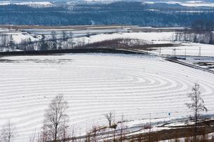 融雪剤が撒かれた雪の畑の写真素材 [FYI01235225]
