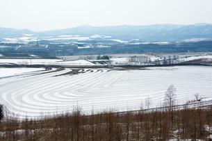 融雪剤が撒かれた雪の畑の写真素材 [FYI01235226]