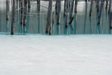 雪解けの湖 美瑛町の写真素材 [FYI01235234]