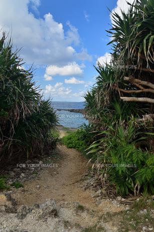 宮古島/白鳥海岸の写真素材 [FYI01235241]