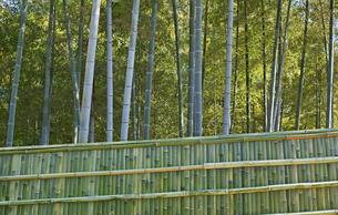 横長の新しい竹垣のある竹林の写真素材 [FYI01235285]
