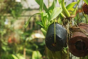 植物園の温室植物の写真素材 [FYI01235289]