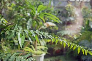 植物園の温室植物の写真素材 [FYI01235291]