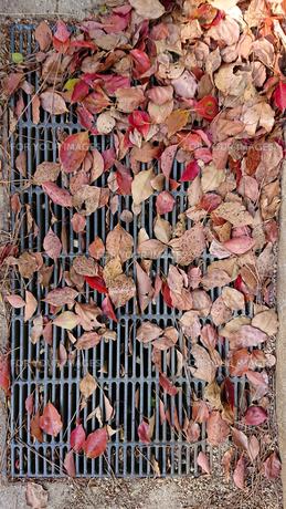 落葉と排水溝の写真素材 [FYI01235336]