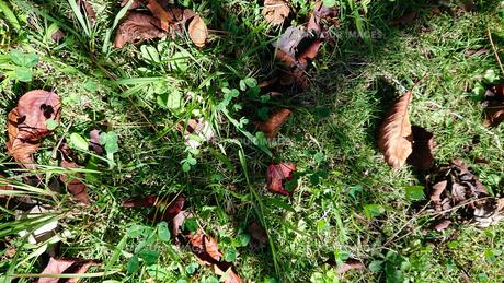 落葉と影の写真素材 [FYI01235338]