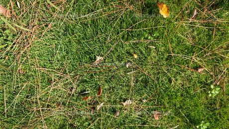 芝生の写真素材 [FYI01235339]