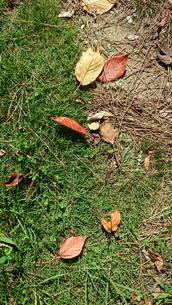 落葉の写真素材 [FYI01235340]