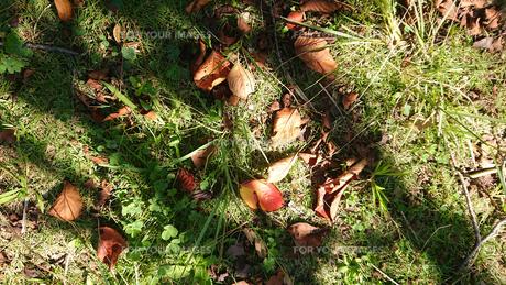 落葉と影の写真素材 [FYI01235341]