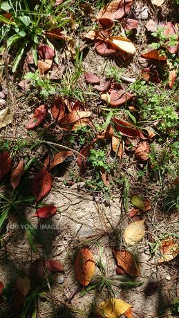 落葉の写真素材 [FYI01235343]