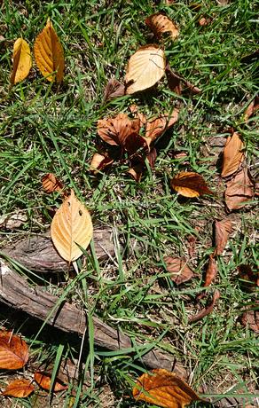 落葉の写真素材 [FYI01235345]